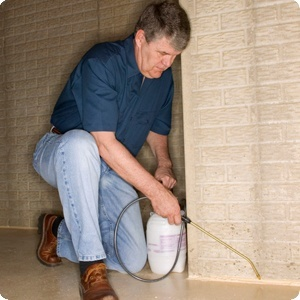 How To Get Rid Of Pill Bugs How To Get Rid Of Stuff