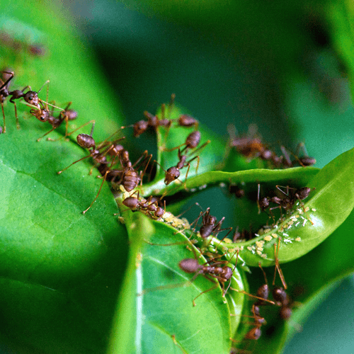 how-to-get-rid-of-ants-in-the-garden.png