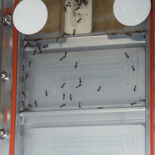 the edge how to remove ants from kitchen the