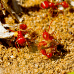 How to Get Rid of Ants in the Lawn