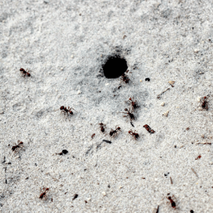 How To Get Rid of Ants in the Yard