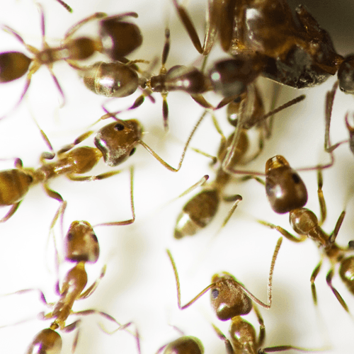 How To Get Rid Of Argentine Ants Naturally