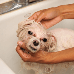How to Get Rid of Dog Fleas
