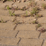 How to Get Rid of Driveway Weeds