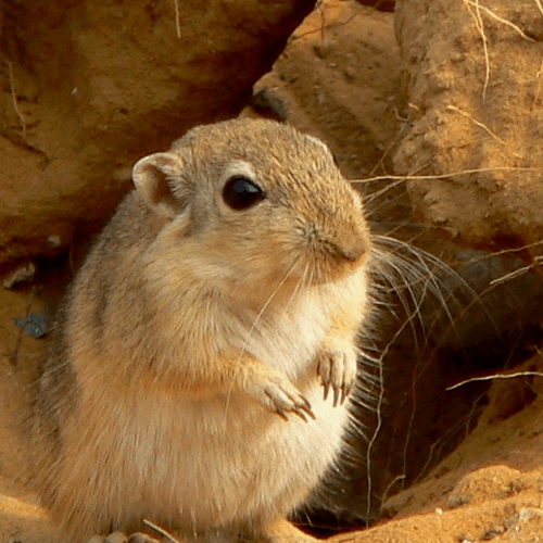 How To Get Rid Of Chipmunks Stuff