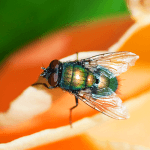 How to Get Rid of Flies in the Yard
