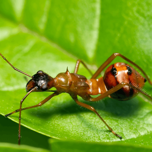 How to Get Rid of Garden Ants