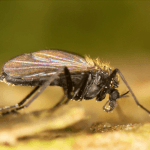 How to Get Rid of Gnats in Your Home