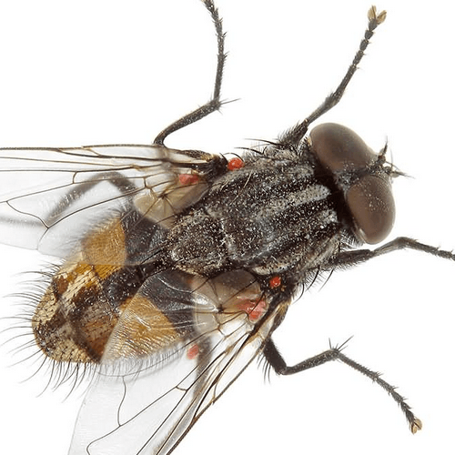 How to Get Rid of House Flies. How to Get Rid of Fruit Flies   How to Get Rid of Stuff