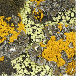 How to Get Rid of Lichen
