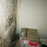 How to Get Rid of Mold (Structural)