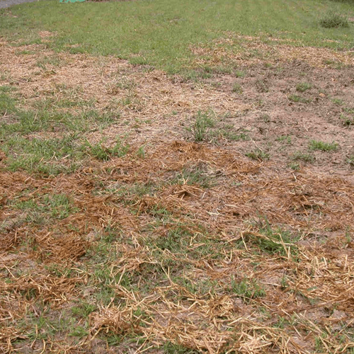 How To Get Rid Of Muddy Grass How To Get Rid Of Stuff