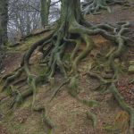 How to Get Rid of Tree Roots