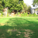How to Get Rid of Lawn Patches