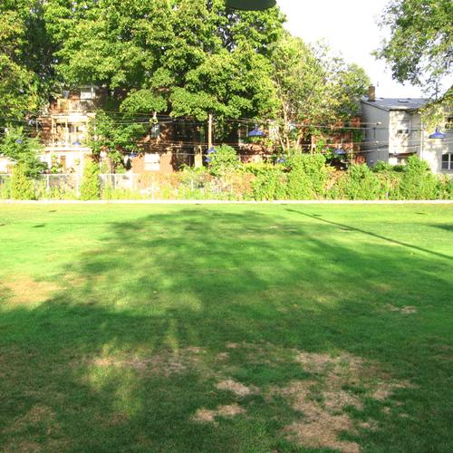 how to get rid of patches on your lawn