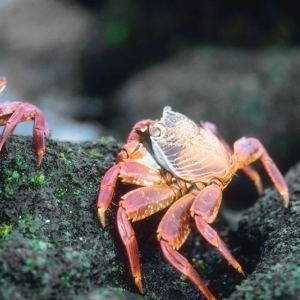 How To Get Rid Of Crabs How To Get Rid Of Stuff
