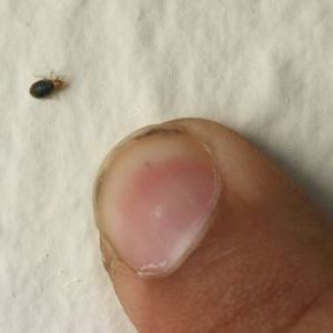 Natural Bed Bug Removal How To Get Rid Of Fleas In A House With Pets How To Get Rid Of Bed