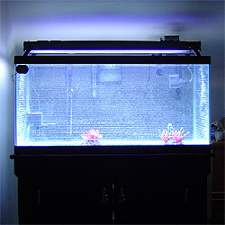 How to get rid of spider mites 2015 personal blog for Cloudy fish tank water