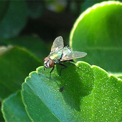 how to get rid of garbage flies