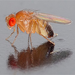 how to catch fruit flies in your kitchen